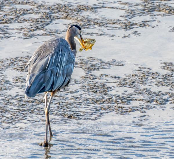 Fishing Dianne Reid (Hon. Mention)